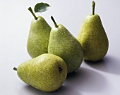 Four 'Dr. Guyot' pears (Pyrus communis)