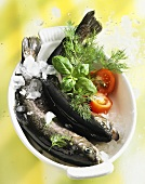 Chilled trout with herbs in a bowl