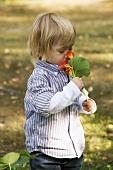 Boy smelling at nasturtiums