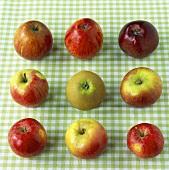 Neun verschiedene Äpfel auf kariertem Tuch