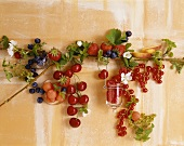 Summer fruit with flowers and leaves on a wall
