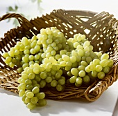 White grapes, variety: Thompson Seedless, S. Africa