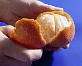 Peeling a mandarin