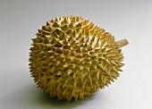 Whole durian (Durio zibethinus)