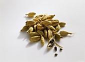 Cardamom (Elettaria cardamomum)