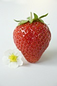 A strawberry with flower