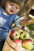 Child reaching for wooden bucket full of apples