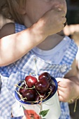 Small girl eating cherries out of a mug