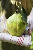 Person holding fresh quince on tea towel
