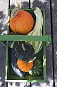 Squashes & pumpkins in green wooden basket (overhead view)