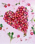 Heart of daisy flowers (Bellis)