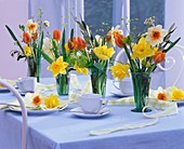 Narcissi and tulips in glass vases on table