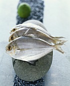 Three butterfish on a stone