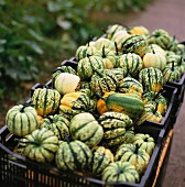 Squashes in crates