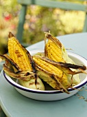Grilled corn on the cob in dish on garden table