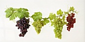 Various types of grapes with leaves