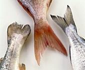 Fish tails