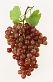 Rosé grapes with leaves