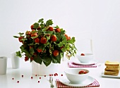 Bouquet of strawberries and redcurrants