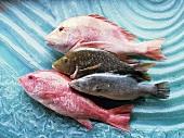 Saltwater fish (reef fish)