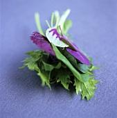 Various herb leaves