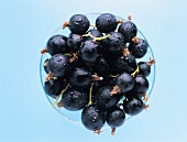 Blackcurrants with drops of water in a bowl