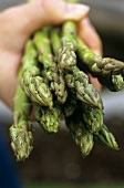 Hand holding green asparagus spears