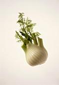 A fennel bulb