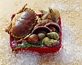 Fresh shellfish (crab, mussels etc.) in basket