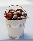 Bucket of various shellfish