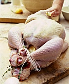 A chicken being stuffed