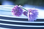 Chive flowers on a pile of plates