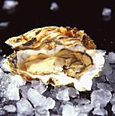 A fresh oyster on ice