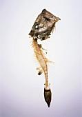 Fish bones (John Dory)