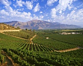 Errazuriz-Panquehue wine region, Aconcagua Valley, Chile
