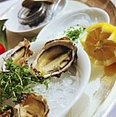 Fresh oysters on ice; lemons; caviare