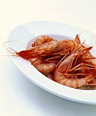 Spanish saltwater gambas on plate
