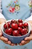 Hands holding bowl of fresh cherries