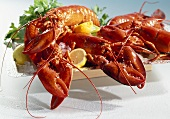 American lobster, cooked