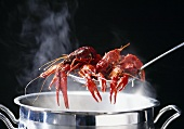 Louisiana swamp crayfish, cooked in court bouillon