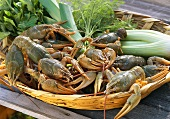 Swamp crayfish with vegetables and herbs