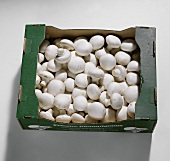 Button mushrooms in cardboard box