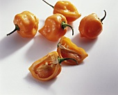 Chili peppers 'Chile habanero'