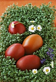 Easter eggs on cress