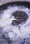 Black caviare on ice