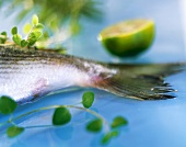 Fish tail with herbs and lime