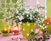 Lobelia in green coffee mug