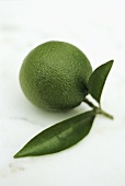 A lime with leaves