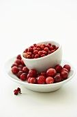 European cranberries in a bowl, American cranberries under it