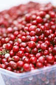 European cranberries in a plastic container
